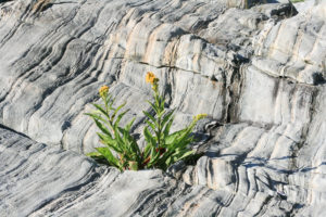 a flower blooms from the rock